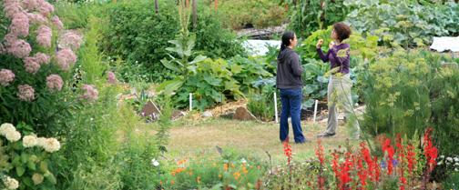 herb-garden-wide